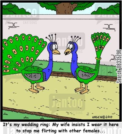 possessive wives cartoon humor: 'It's my wedding ring: My wife insists I wear it here to stop me flirting with other females...'