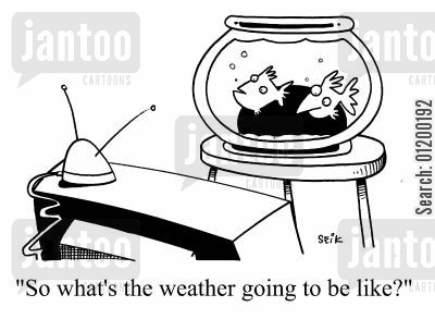 gold fish cartoon humor: So what's the weather going to be like?