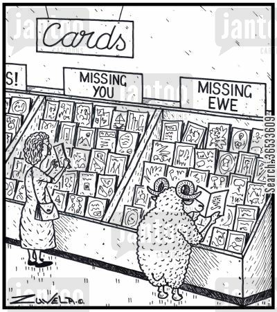 department stores cartoon humor: Cards, Missing You, Missing Ewe (a ram looking for a card for his loved one),