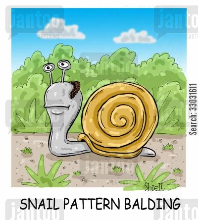 hair transplant cartoon humor: Snail Pattern Balding.