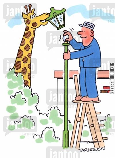 street lamp cartoon humor: Giraffe helping to change lightbulbs in a zoo.