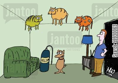 helium balloons cartoon humor: Dog makes cats float with helium.