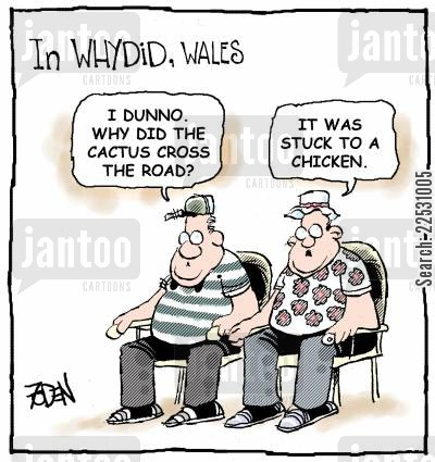 punchline cartoon humor: In Whydid, Wales...I dunno. Why did the cactus cross the road? It was stuck to a chicken.