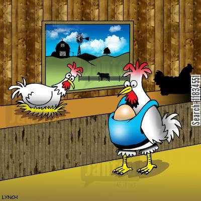hen houses cartoon humor: Chicken with egg in a baby carrier.
