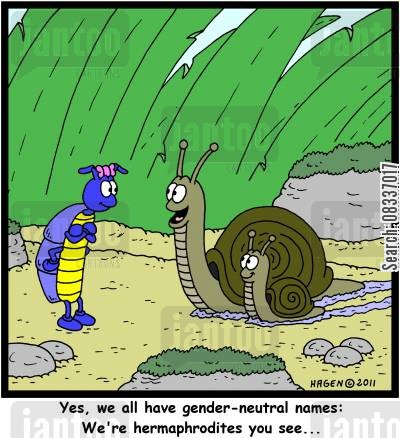 gastropodas cartoon humor: 'Yes, we all have gendre-neutral names: We're hermaphrodites you see...'