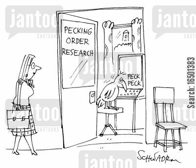 hierarchies cartoon humor: Pecking Order Research