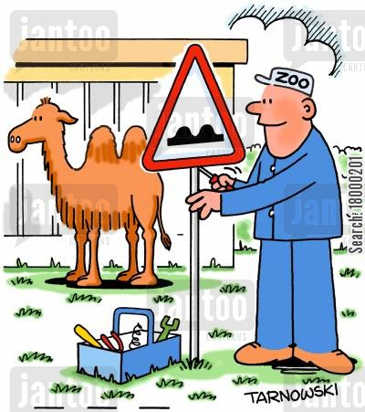 camel cartoon humor: Installing a humped road sign in a camel enclosure.