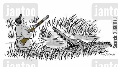 blood sports cartoon humor: Hunter attacked by crocodile.