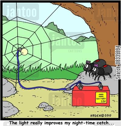 spider web cartoon humor: 'The light really improves my night-time catch...'