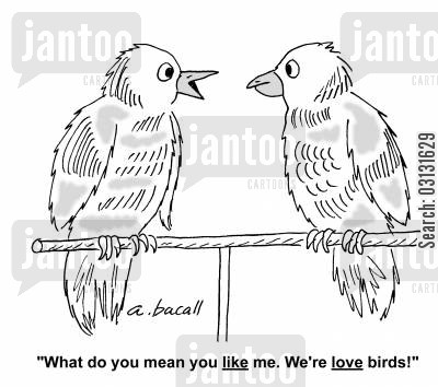 bird lovers cartoon humor: What do you mean, you like me. We're love birds!