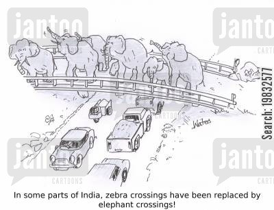 indian elephant cartoon humor: In some parts of India, zebra crossings have been replaced by elephant crossings!