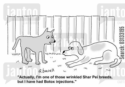 botox injection cartoon humor: '...I'm one os those wrinkled Shar Pei breeds, but I had Botox injections.'