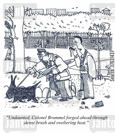 reporters cartoon humor: 'Undaunted, Colonel Brummel forged ahead through dense brush and sweltering heat.'
