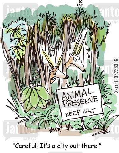 animal preserve cartoon humor: Careful. It's a city out there!
