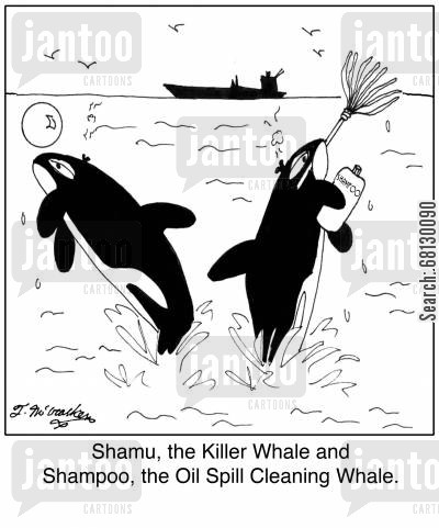 orca cartoon humor: Shamu, the Killer Whale and Shampoo, the Oil Spill Cleaning Whale.