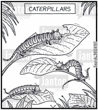 moth cartoon humor: Caterpillars