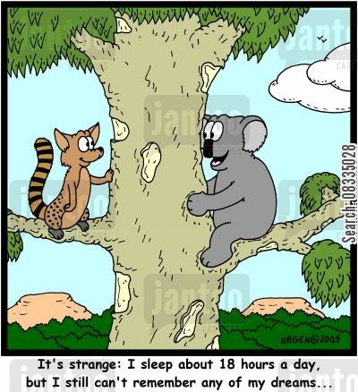 koala bears cartoon humor: 'It's strange: I sleep about 18 hours a day, but I still can't remember any of my dreams...'