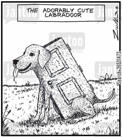 pedigree cartoon humor: The adorably cute Labradoor (A dog in the shape of a door)