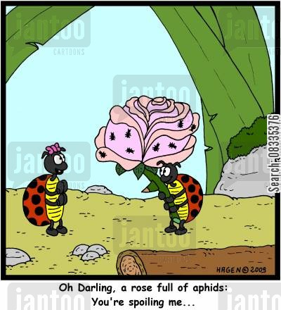 date cartoon humor: 'Oh Darling, a rose full of aphids: You're spoiling me...'