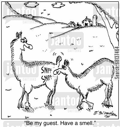 llama farms cartoon humor: 'Be my guest. Have a smell.'