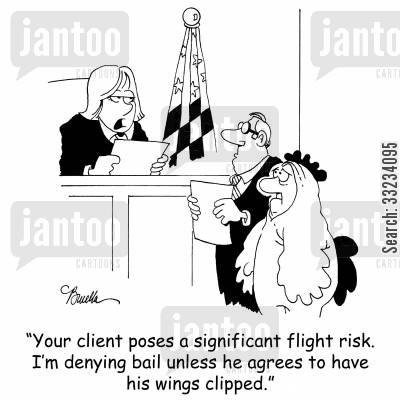flight risk cartoon humor: 'Your client poses a significant flight risk. I'm denying bail unless he agrees to have his wings clipped.'