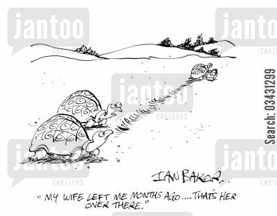 tortoises cartoon humor: 'My wife left me months ago...That's her over there.'