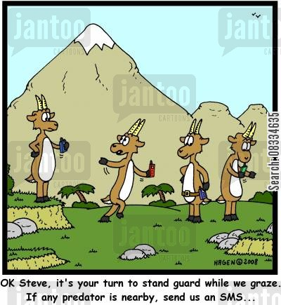 lookout cartoon humor: 'OK Steve, it's your turn to stand guard while we graze. If any predator is nearby, send us an SMS...'