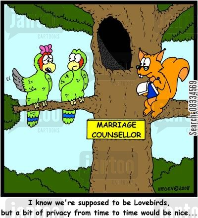 lovebird cartoon humor: 'I know we're supposed to be Lovebirds, but a bit of privacy from time to time would be nice...'