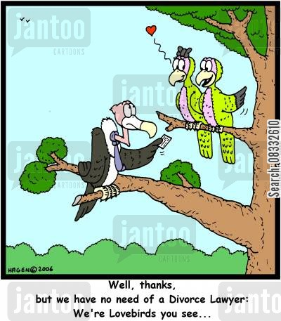 failed marriage cartoon humor: Well, thanks, but we have no need of a Divorce Lawyer: We're Lovebirds you see...'