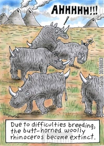 evolutionary cartoon humor: 'Due to difficulties breeding, the butt-horned woolly rhinoceros became extinct.'