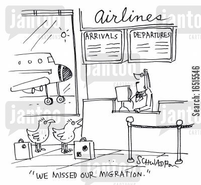 last minute flights cartoon humor: 'We missed our migration.'