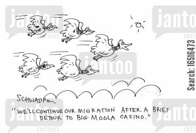 placing bets cartoon humor: 'We'll continue our migration after a brief detour to Big Moolah Casino.'