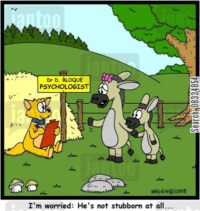 stubborn as a mule cartoon humor: 'I'm worried: He's not stubborn at all...'