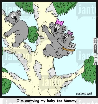 koala bears cartoon humor: 'I'm carrying my baby too, Mummy...'