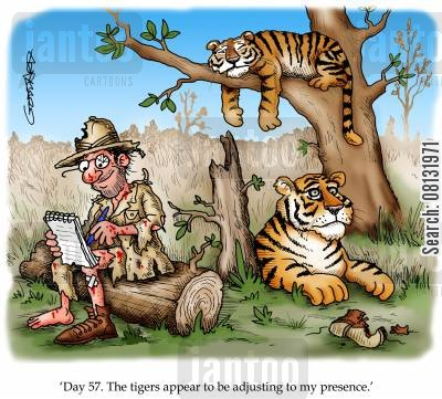 wildlife cartoon humor: 'Day 57. The tigers appear to be adjusting to my presence.'