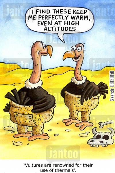 thermals cartoon humor: 'Vultures are renowned for their use of thermals'.