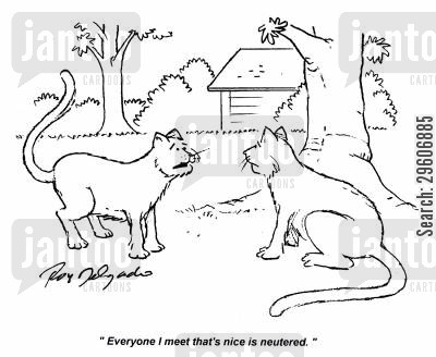 kitties cartoon humor: 'Everyone I meet that's nice is neutered.'