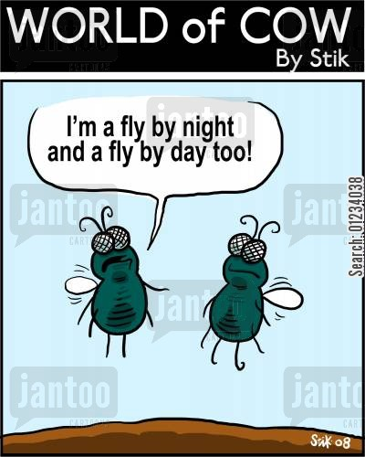 day job cartoon humor: 'I'm a fly by night and a fly by day too!'