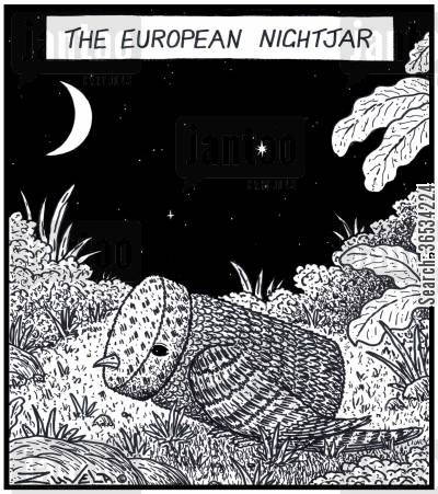 jars cartoon humor: A European Nightjar in the form of a Jar