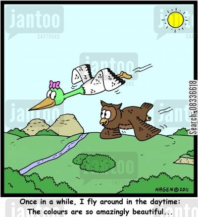 nocturnal birds cartoon humor: 'Once in a while, I fly around in the daytime: The colours are so amazingly beautiful...'
