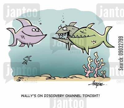 tv star cartoon humor: Wally's on Discovery Channel tonight!
