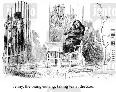 civilized animal cartoon humor: Jenny, the orang-outang, taking tea at the Zoo.