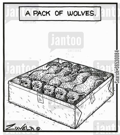 packet cartoon humor: A pack of wolves.