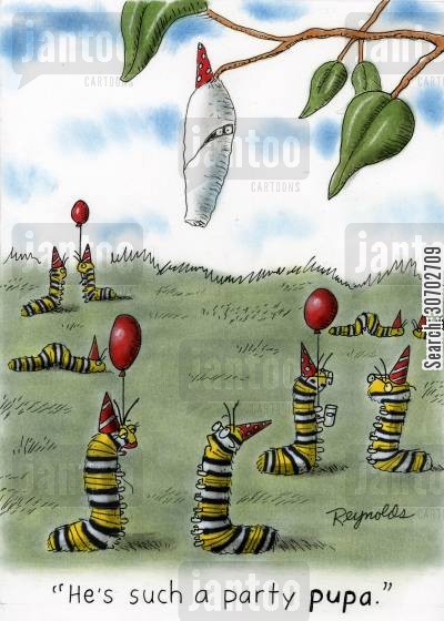 cocoons cartoon humor: 'He's such a party pupa.'
