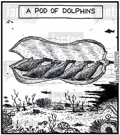 pods cartoon humor: A pod of Dolphins.