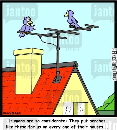 tv aerial cartoon humor: 'Humans are so considerate: They put perches like these for us on every one of their houses...'