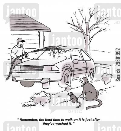 life lessons cartoon humor: 'Remember, the best time to walk on it is just after they've washed it.'