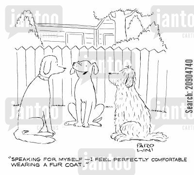 comforting cartoon humor: 'Speaking for myself - I feel perfectly comfortable wearing a fur coat.'