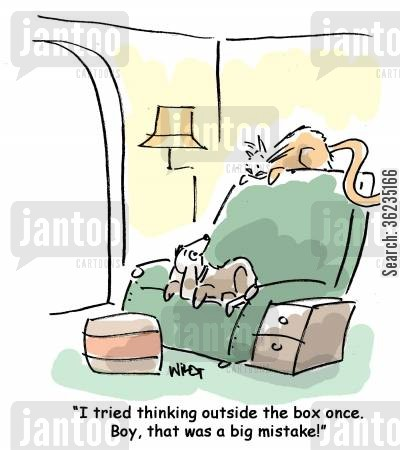 kitty litter cartoon humor: I tried thinking outside the box once. That was a big mistake!