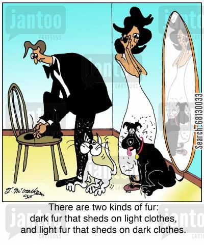 shedding hair cartoon humor: There are two kinds of fur: dark fur that sheds on light clothes, and light fur that sheds on dark clothes.